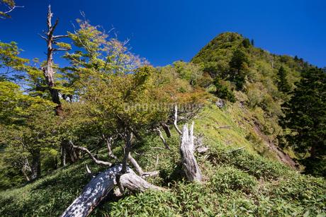 奈良県 大峰山 水太覗付近より大普賢岳を望むの写真素材 [FYI01767048]