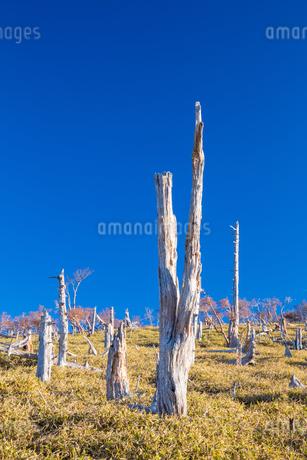 大台ヶ原の枯木群の写真素材 [FYI01767113]
