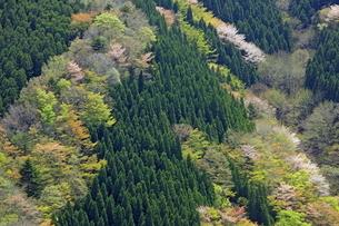 新緑の山肌の写真素材 [FYI01767155]