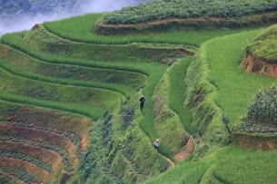 中国・龍勝の棚田風景の写真素材 [FYI01767355]