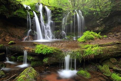 猿壷の滝の写真素材 [FYI01767363]