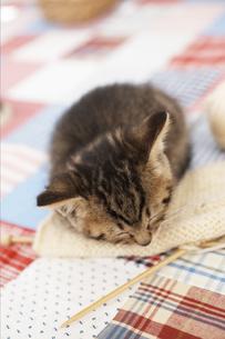 編み物の上で眠る猫の写真素材 [FYI01767457]