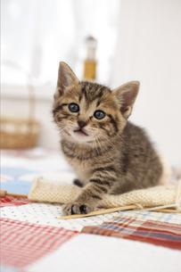編み物と猫の写真素材 [FYI01767529]