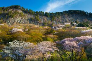 桜咲く屏風岩公苑の写真素材 [FYI01767533]