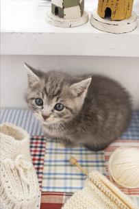毛糸と猫の写真素材 [FYI01767877]