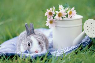 芝生の上のミニウサギとジョウロの写真素材 [FYI01767935]
