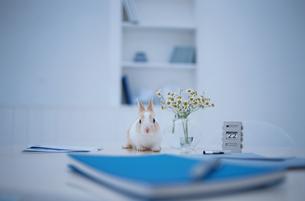 デスク上の青いステーショナリーとミニウサギの写真素材 [FYI01767990]