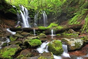 猿壷の滝の写真素材 [FYI01768084]