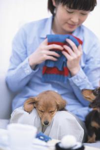 女性の膝の上で眠る犬の写真素材 [FYI01768163]