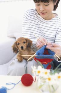 編物をする女性とミニチュアダックスの写真素材 [FYI01768209]