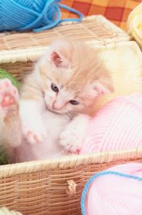 カゴの中の仔猫と毛糸玉の写真素材 [FYI01768363]