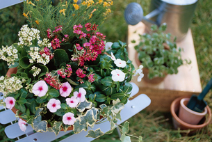 花とガーデニング小物の写真素材 [FYI01768439]