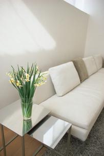 白いソファの脇に活けた水仙の写真素材 [FYI01768585]