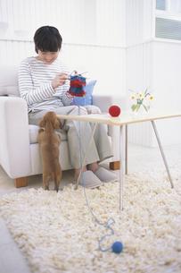 編み物をする女性と犬の写真素材 [FYI01768689]