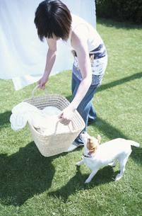 洗濯物を干すかごを持つ女性と犬の写真素材 [FYI01768786]
