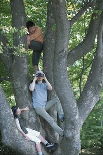 木に登る男性2人と女性の写真素材 [FYI01769142]