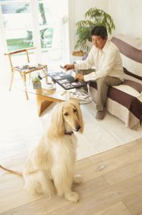 アルバムを整理する男性と犬の写真素材 [FYI01769195]