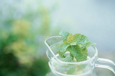 水差しとミントの葉の写真素材 [FYI01769391]