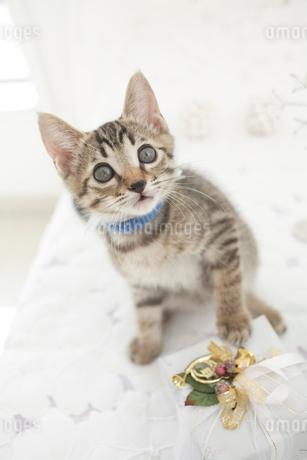猫とプレゼントの写真素材 [FYI01769764]