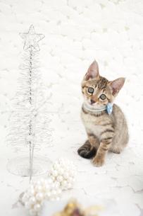 猫とツリーの写真素材 [FYI01769879]