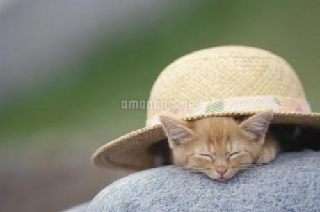 麦藁帽子の下で眠る猫(日本猫)の写真素材 [FYI01770763]