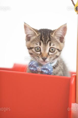 手押し車の中の猫の写真素材 [FYI01770858]
