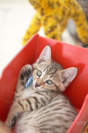 手押し車の中の猫の写真素材 [FYI01770901]