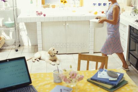 キッチンにいる女性と犬(ゴールデンレトリバー)の写真素材 [FYI01771190]