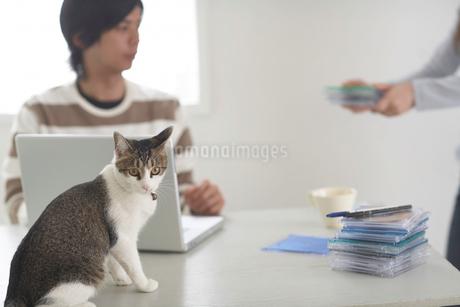机の上に座る猫とノートパソコンをする人の写真素材 [FYI01771429]