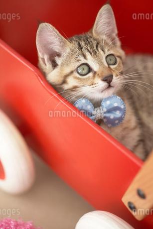 手押し車の中の猫の写真素材 [FYI01771606]