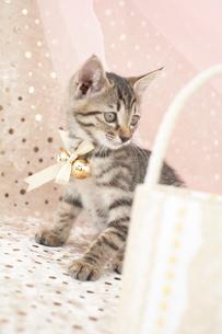 猫とバッグの写真素材 [FYI01771775]