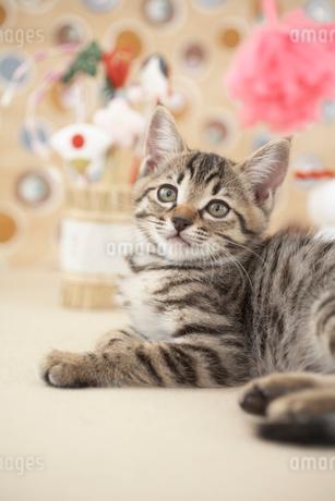猫と正月飾りの写真素材 [FYI01771796]
