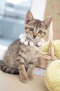 猫と毛糸玉の写真素材 [FYI01771908]