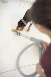 掃除機にじゃれるロットワイラーの写真素材 [FYI01771971]