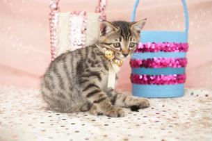 猫とバッグの写真素材 [FYI01772129]