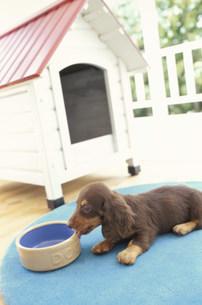 青く丸いラグの上の犬と犬小屋の写真素材 [FYI01772285]
