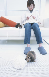 ソファで編み物をする女性と犬2匹の写真素材 [FYI01772414]