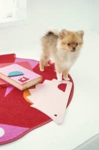 マットの上に立つ犬(ポメラニアン)と本や小物の写真素材 [FYI01773075]