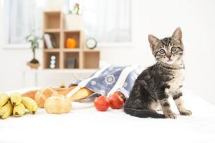 子猫(雑種)とパンや野菜の写真素材 [FYI01773196]