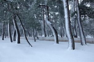 気比の松原雪景色の写真素材 [FYI01773249]
