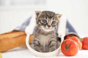 子猫(雑種)とパンや野菜の写真素材 [FYI01773491]