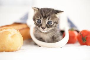 子猫(雑種)とパンや野菜の写真素材 [FYI01773525]
