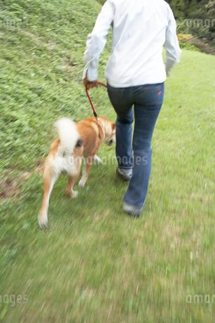 犬の散歩をする女性の写真素材 [FYI01773789]