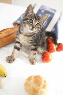 子猫(雑種)とパンや野菜の写真素材 [FYI01773973]