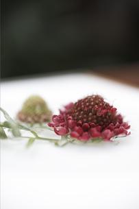 トレイに乗せた花の写真素材 [FYI01774115]