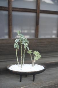 木造家屋に置いた観葉植物の写真素材 [FYI01774190]