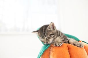 クッションの上の猫(雑種)の写真素材 [FYI01774401]