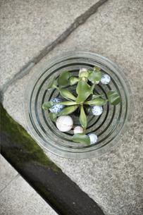 植物を生けた鉢の写真素材 [FYI01774437]