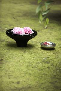 苔の上に置いた花の入った鉢の写真素材 [FYI01774566]