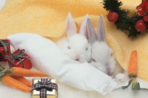 寄り添う2匹のウサギの写真素材 [FYI01774820]